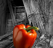 Rural Red Pepper by Randall Nyhof