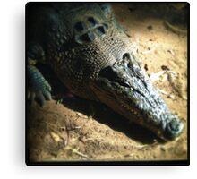 Croc Canvas Print