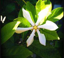 White Flower by Niki Smallwood