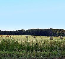 Harvested Hay by BarbL