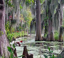 Swamp Drapes by Gary Conner