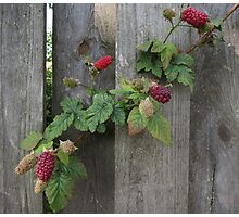Peeking through... (1) Photographic Print