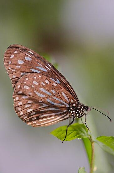 Butterfly by Nicole W.