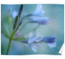 Blue Nile Iris Poster