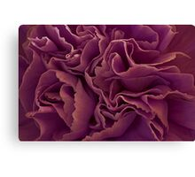 Purple Carnation Macro Canvas Print