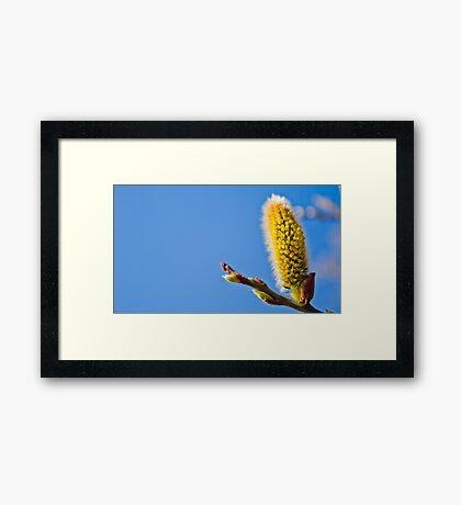 Plant, close up Framed Print