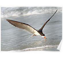 A Skimmer Skimming! Poster