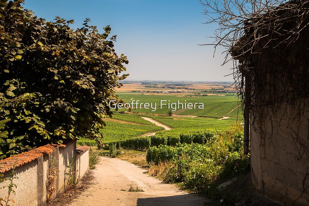 Vineyard view by Geoffrey Fighiera