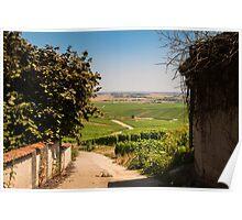 Vineyard view Poster