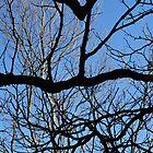 Branches IV by Lauren Steinhauer