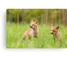LOOKING FOR DUCKS Canvas Print