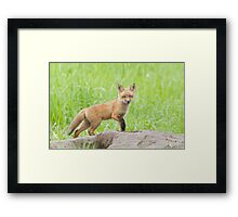 The Wild Pup Framed Print