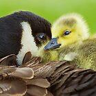 Maternal Love by MIRCEA COSTINA