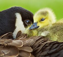 Maternal Love by MIRCEA COSTINA
