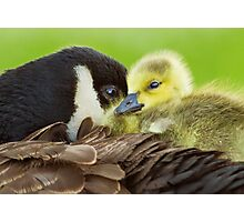 Maternal Love Photographic Print