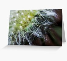 Dandelion Fluff Greeting Card