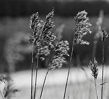 Plants, black & white by mattijs