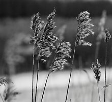 Plants, black & white by mattijs
