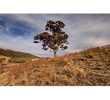 Lonley  Times,  Australian Landscape Photographic Print
