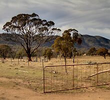 Open 24 /7  Farm Gate  Australia  Canberra by Kym Bradley