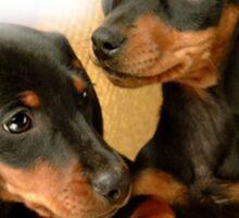 Dachshund Dogs Sticker