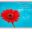 Red Gerber Daisy and Blue by KellyHeaton