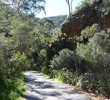 A View from Lower Heysen Trail, Morialta Cons. Park. Adelaide Foothills. by Rita Blom