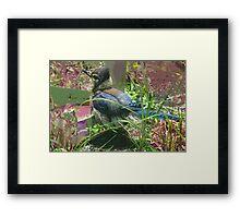 Back step bird Framed Print