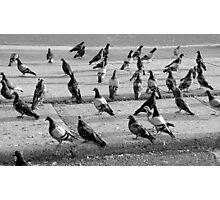 The pigeons - b&w Photographic Print