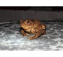 Toad Photographic Print