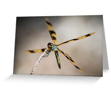Dragonfly #1 Greeting Card
