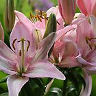 Summer Lilies by Lynn Gedeon