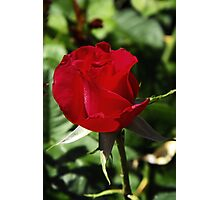 One Red Rosebud Photographic Print