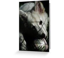 White German Shepherd puppy Greeting Card