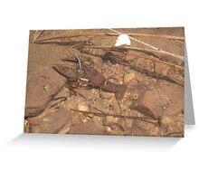 Crab at Willow Springs Lake, Forest Lakes, Arizona Greeting Card