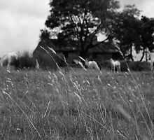 Ditsworthy Meadow by CHINOIMAGES
