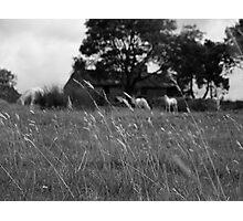 Ditsworthy Meadow Photographic Print