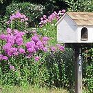 Mail 'n' More by Monnie Ryan