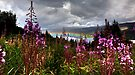 Loch Awe by Roddy Atkinson