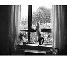 Cat Dancing Photographic Print