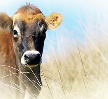 Little cow in the long grass by Clare Colins