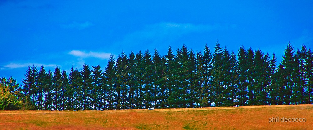 Tall Pines by phil decocco