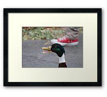 All Star Duck Framed Print