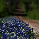 Spring in the Country by Lisa Holmgreen