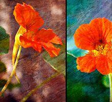 Diptych Nasturtium_2 by Karen Eaton