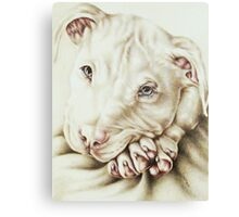 White Pit Bull Dog Drawing Canvas Print