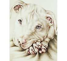 White Pit Bull Dog Drawing Photographic Print