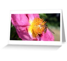 A flower and an insect Greeting Card