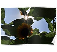 Summer Afternoon Poster