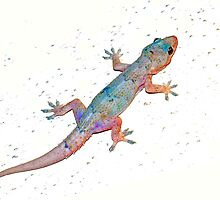 First gecko by ♥⊱ B. Randi Bailey